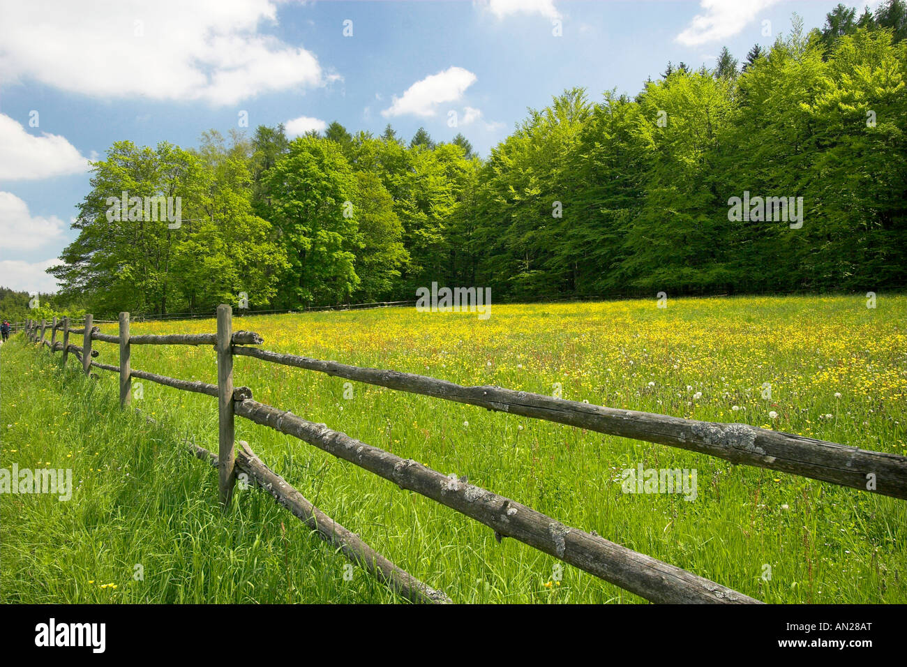 Bluehende Wiese Germany Bluming Meadow - Stock Image
