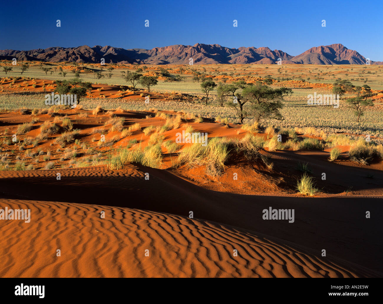 Nature Reserve Namibia Afrika view over red dunes and savanna to the Naukluft mountains Namib Rand Nature Reserve - Stock Image