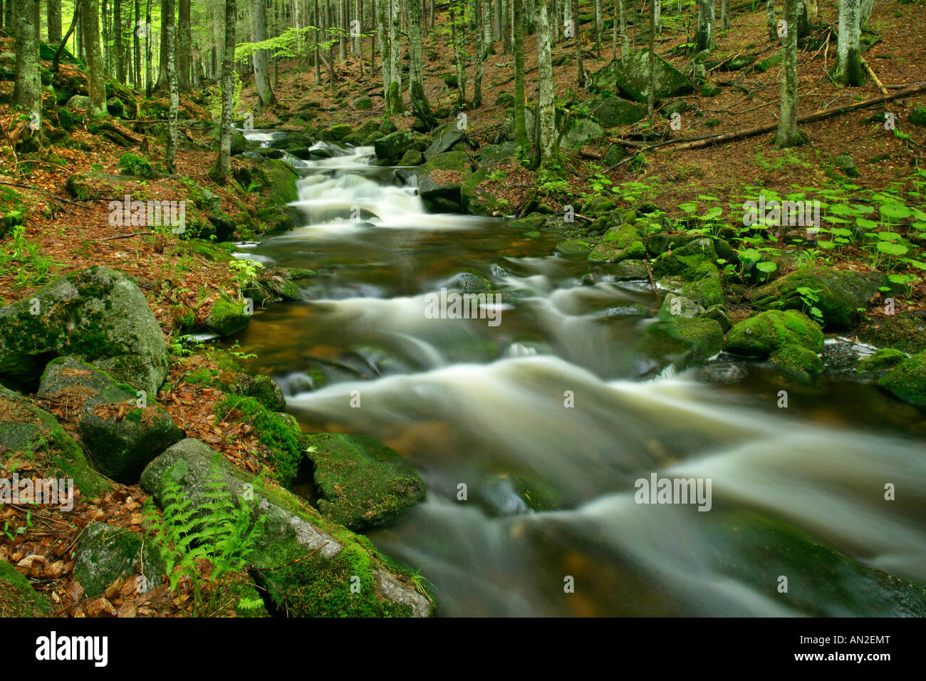 Deutschland Stream with moss covered rocks in primeval forest Bavarian Forest National Park Bavaria Germany Stock Photo