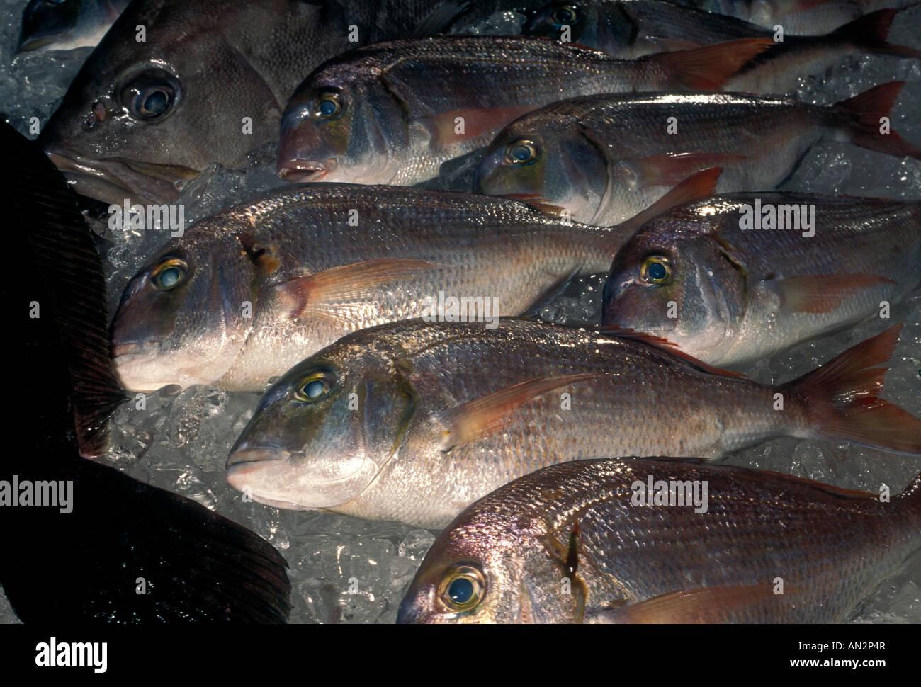 Piranha Piranhas Piranha Fish Seafood Restaurant