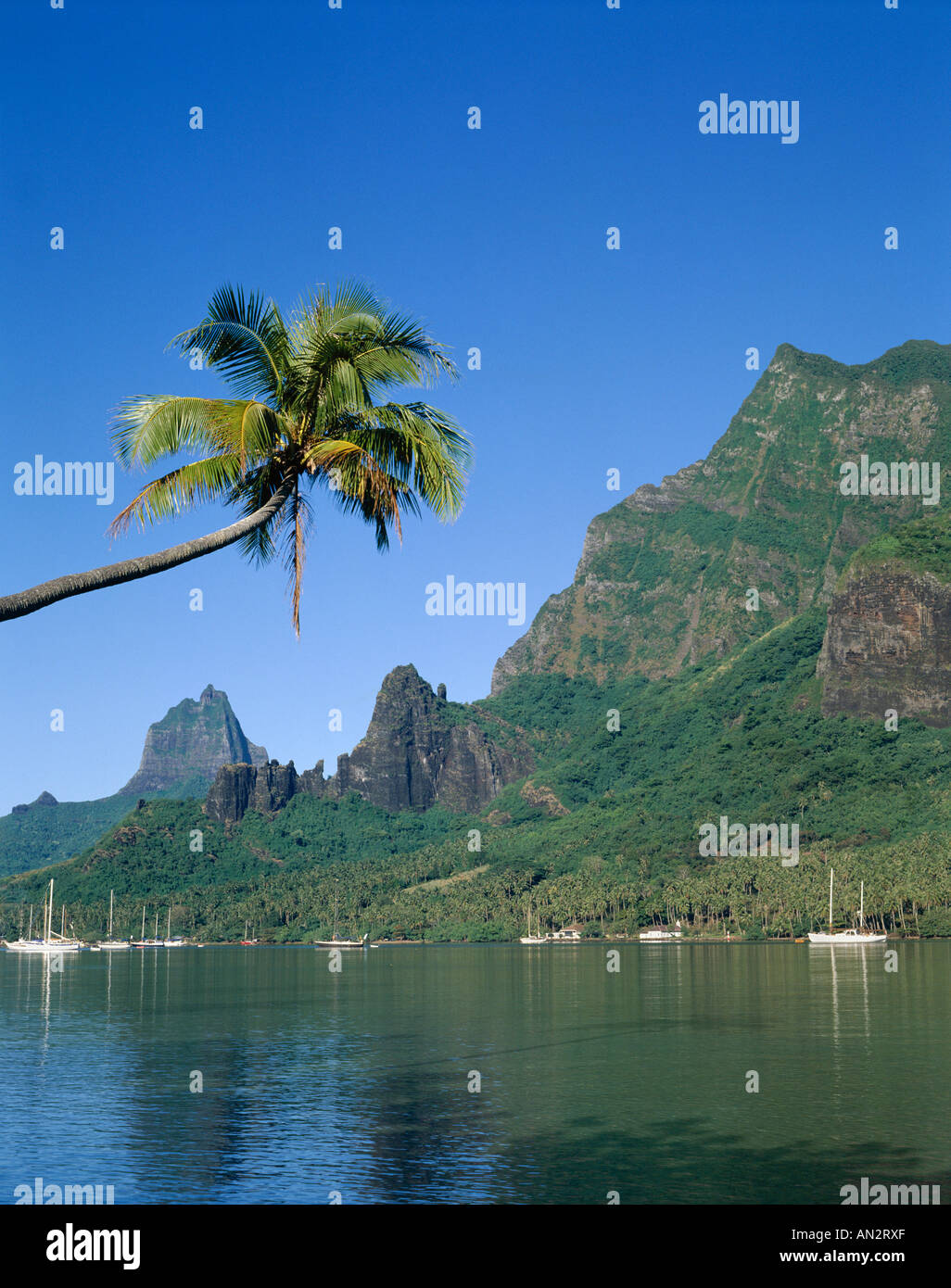 Moorea / Cook's Bay, South Pacific / French Polynesia, Tahiti - Stock Image