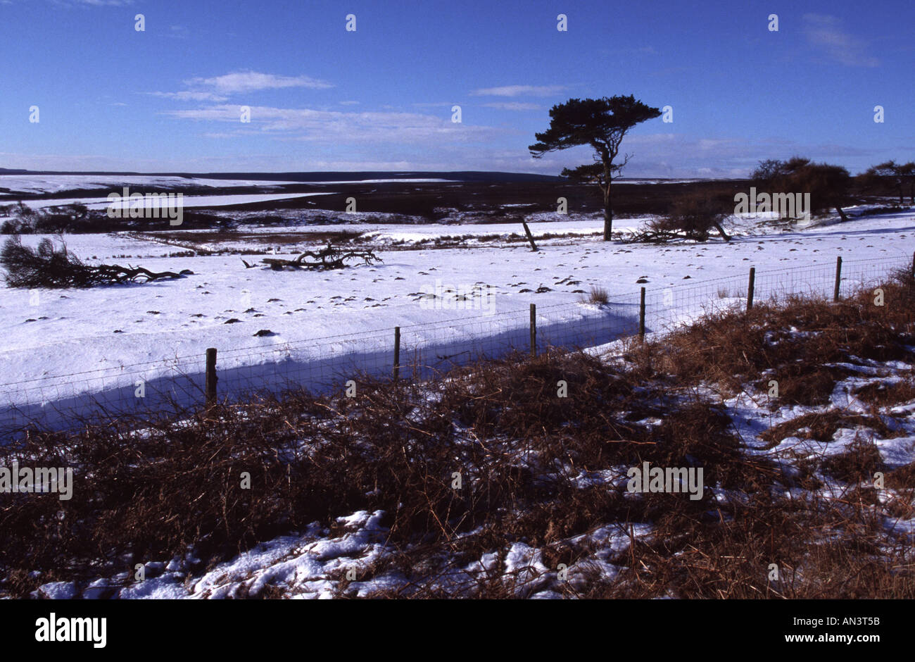 Moors in the snow - Stock Image