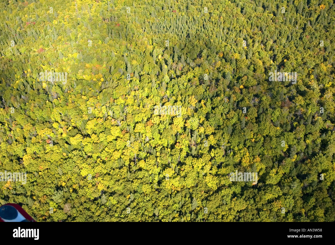 Aerial view of a Mixed hardwood and softwood forest in northern New Brunswick Canada near Dalhousie in early autumn - Stock Image
