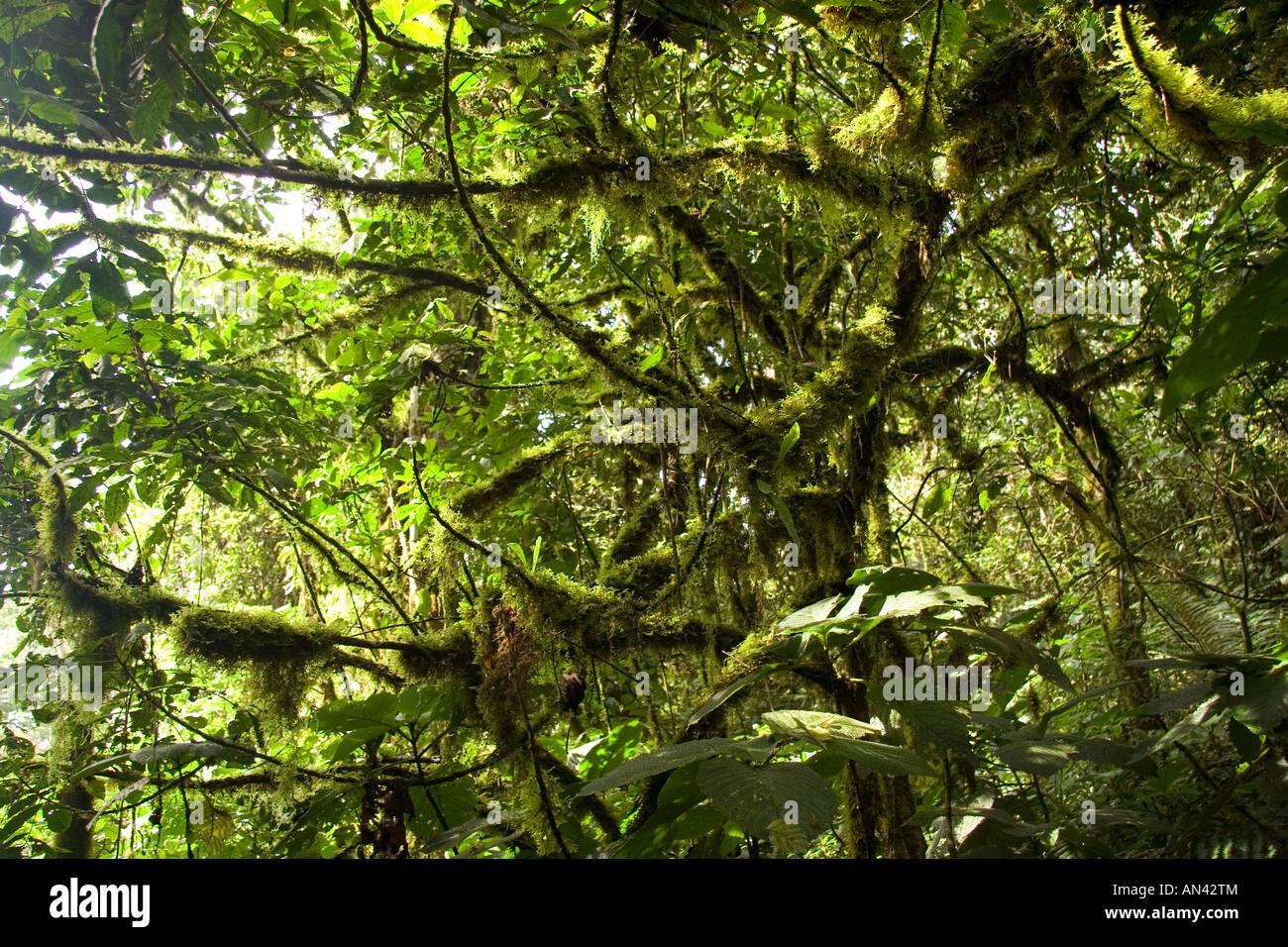 bwindi jungle - stock image