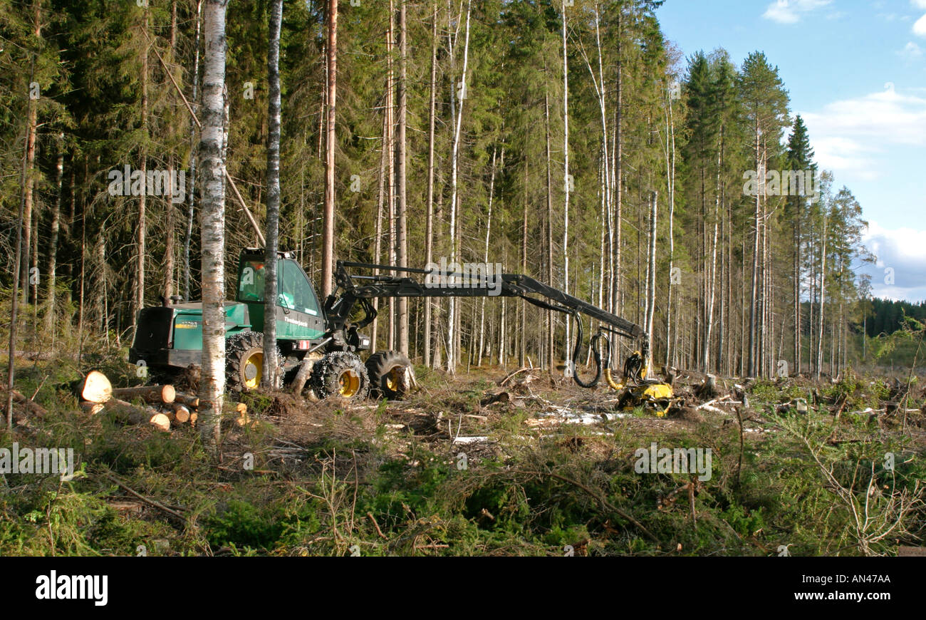 Forest cut down by a Timberjack forest harvester , Finland Stock