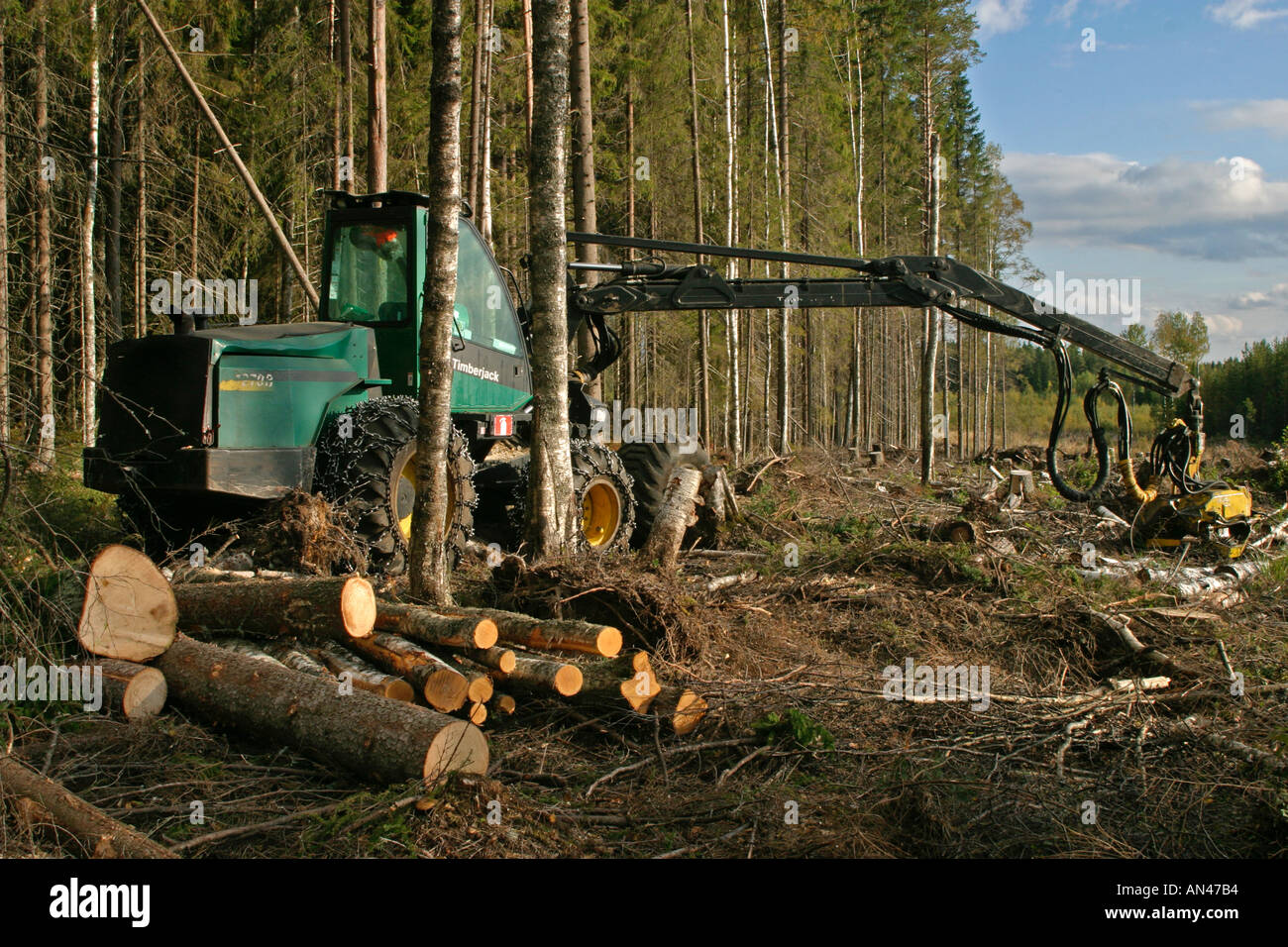 Forest cut down by a Timberjack forest harvester , Finland Stock Photo