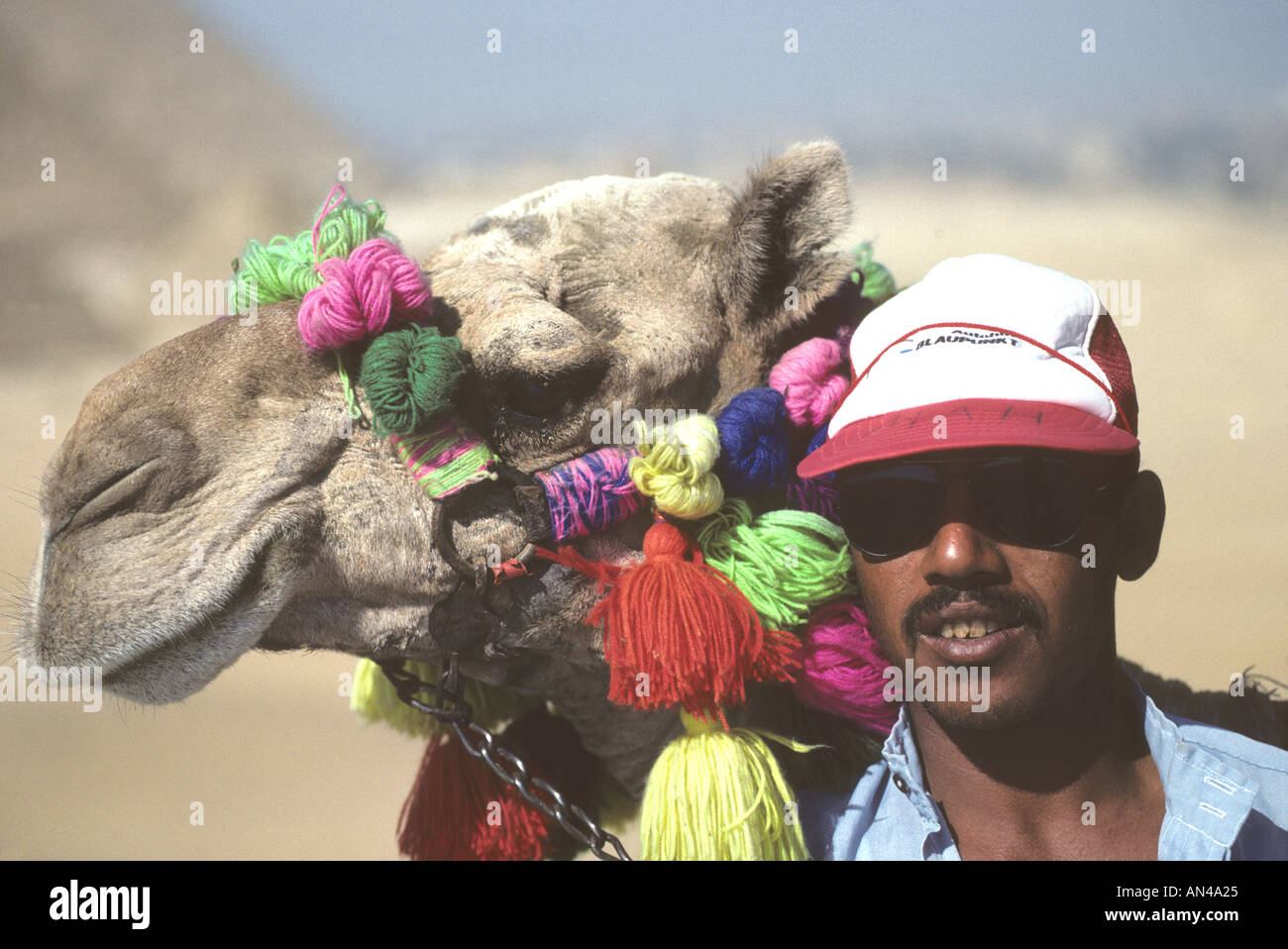 Abp597 camel owner pyramids giza egypt stock photos & camel owner