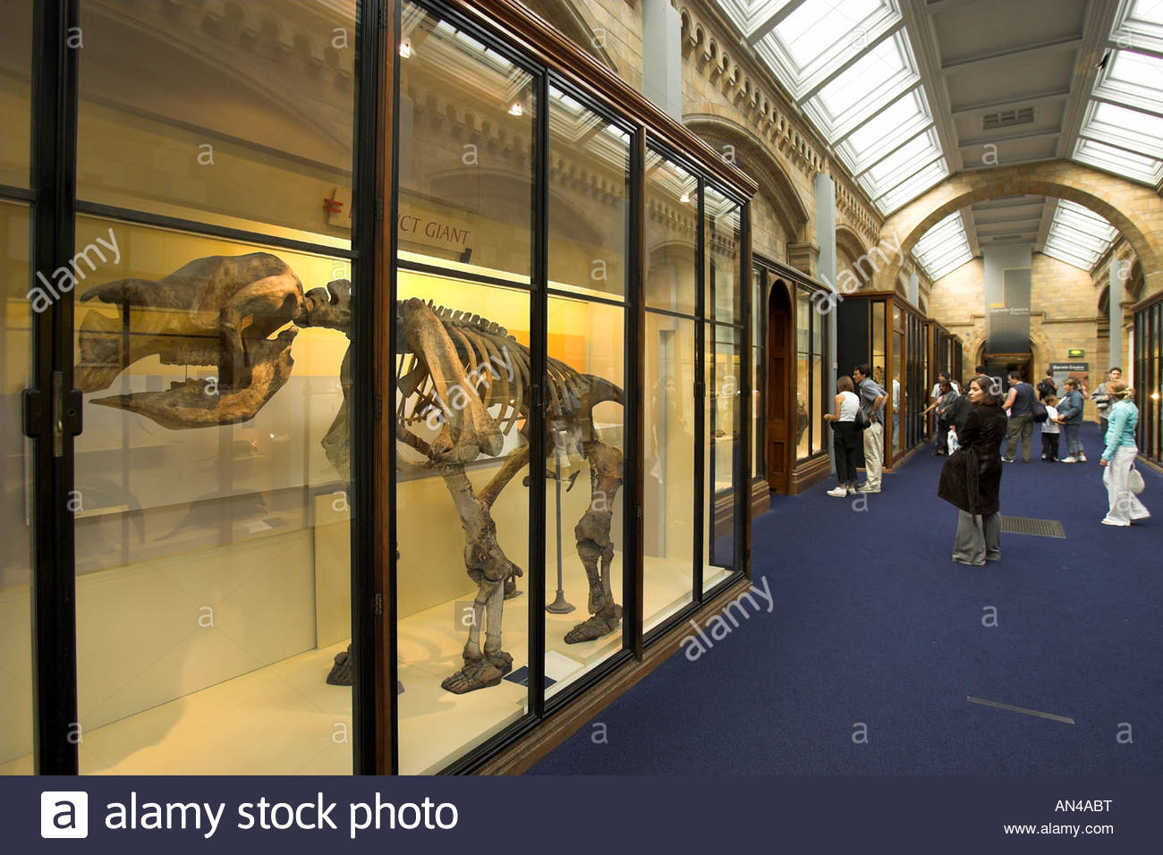 London, Natural History Museum - Stock Image
