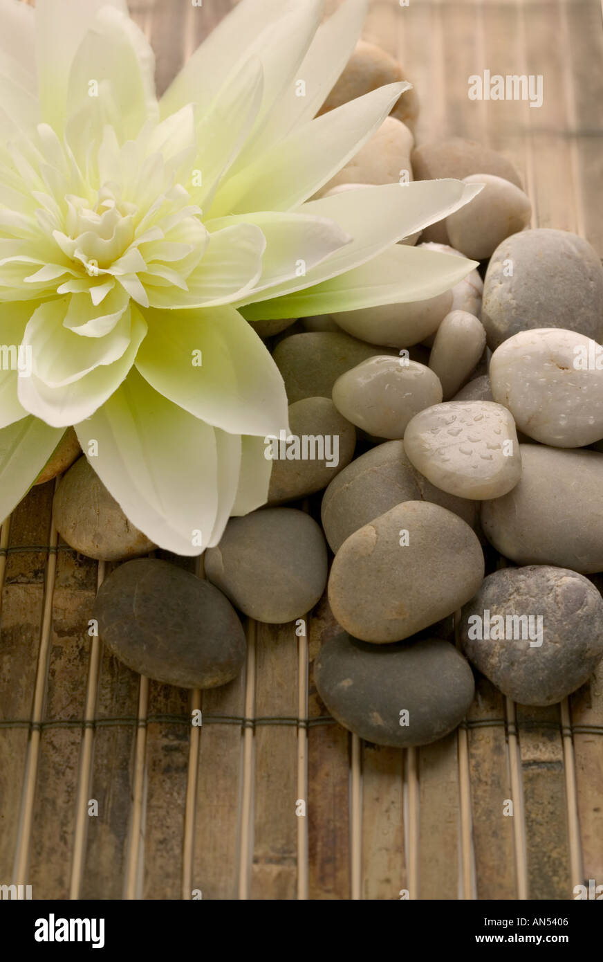 Stones and a lovely flower - Stock Image