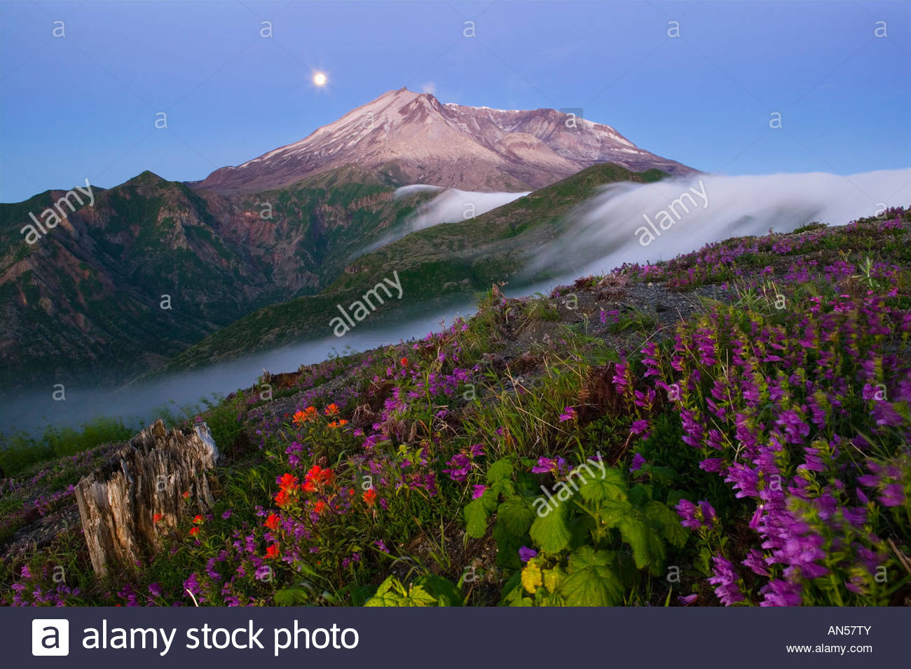 The full moon sets behind Mount St Helens, which is framed by a dramatic fog falls and blooming summer wildflowers. Stock Photo