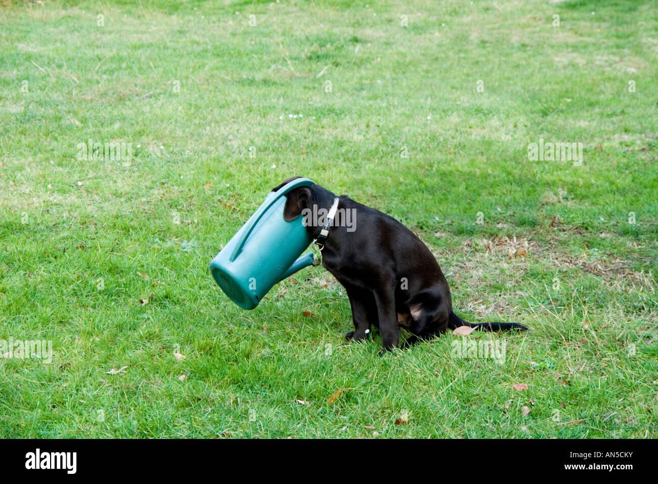 'Curiosity killed the cat' and trapped the dog too! La curiosité est un vilain défaut ! - Stock Image