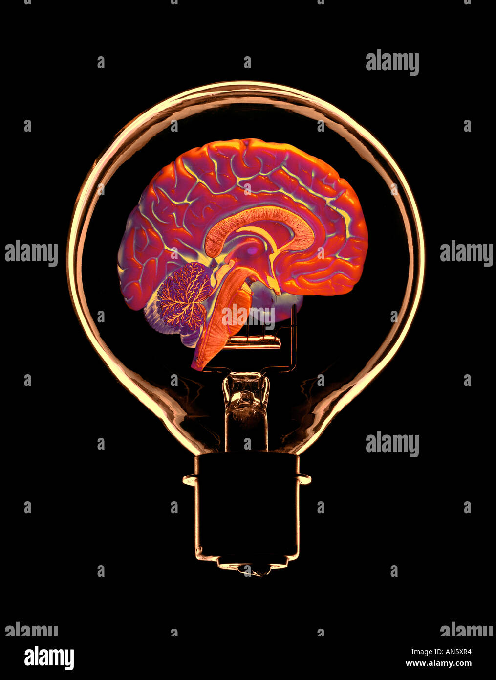 FALSE COLOUR IMAGE OF GLASS ELECTRIC LIGHT BULB CONTAINING HALF OF HUMAN BRAIN - Stock Image