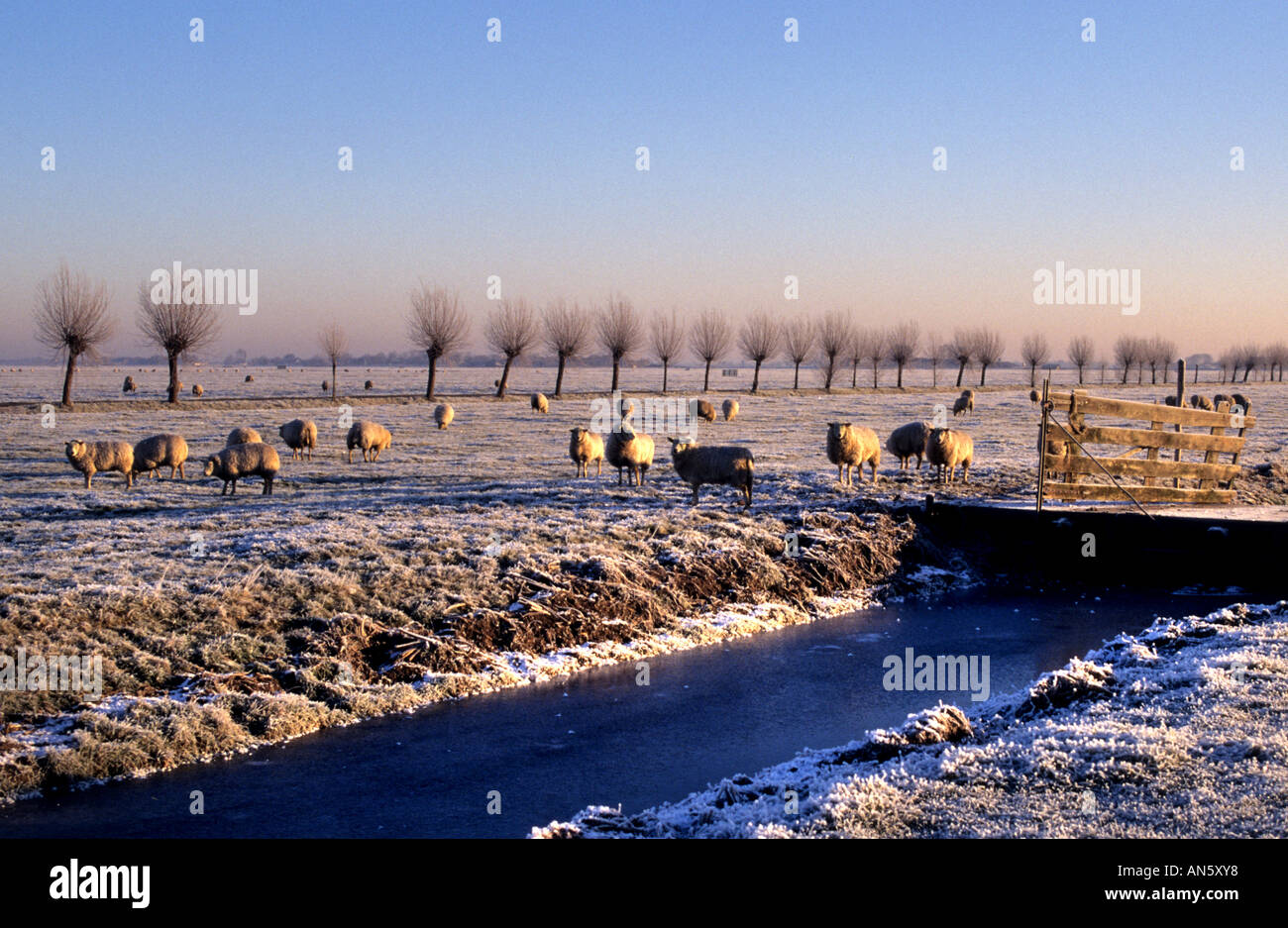 Near Leiden Oude Ade Netherlands Winter Snow Ice Holland - Stock Image