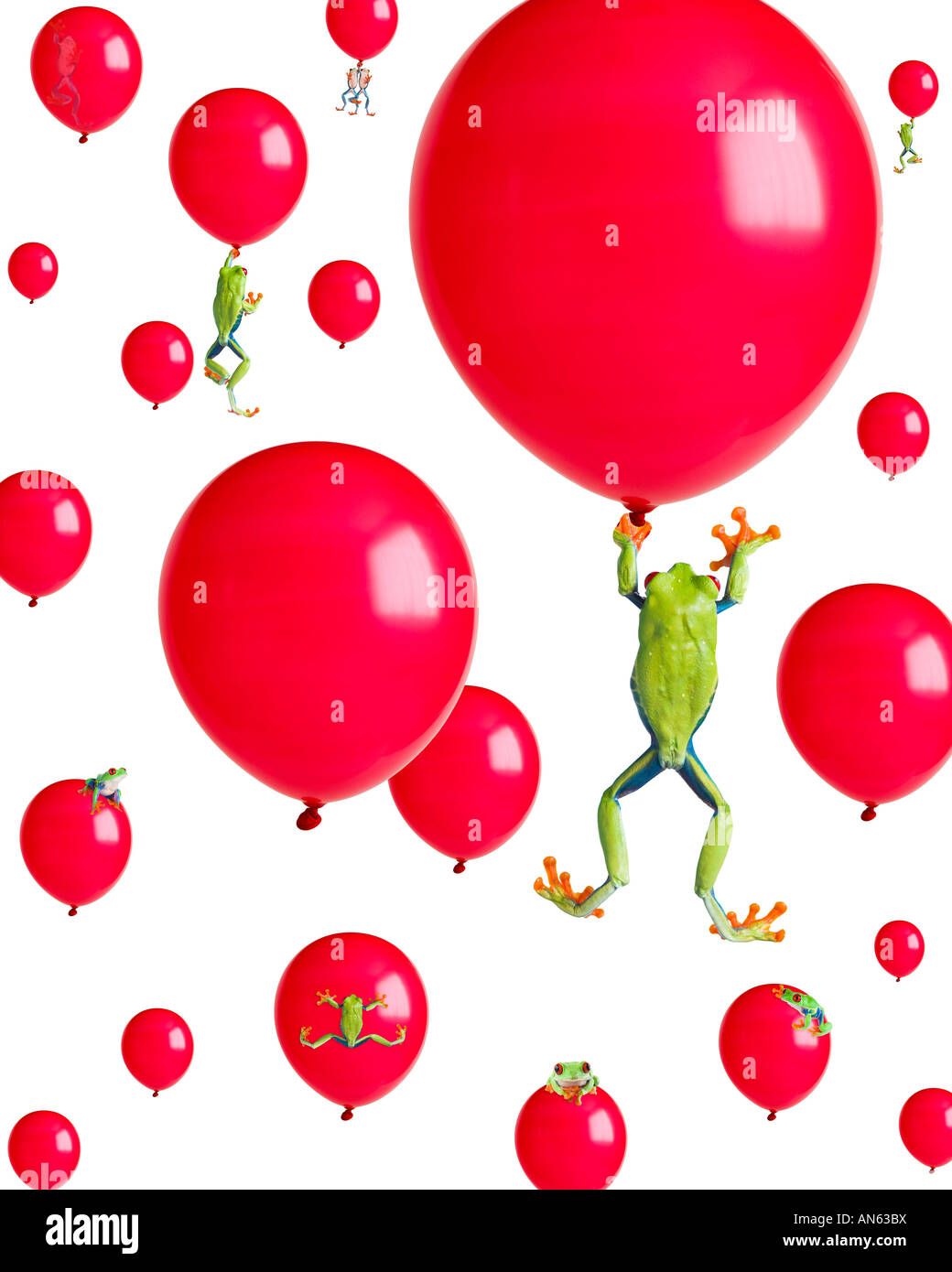 Red-eyed Treefrogs floating on red balloons - Stock Image