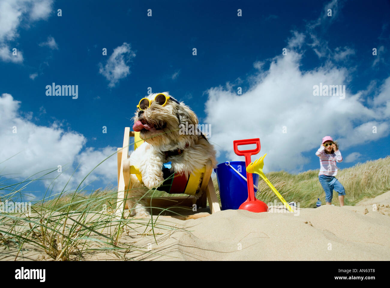 Toby Schitzu Shih Tzu dog in deckchair and sunglasses Camber Sands East Sussex Britain UK England and Georgia Starkey - Stock Image