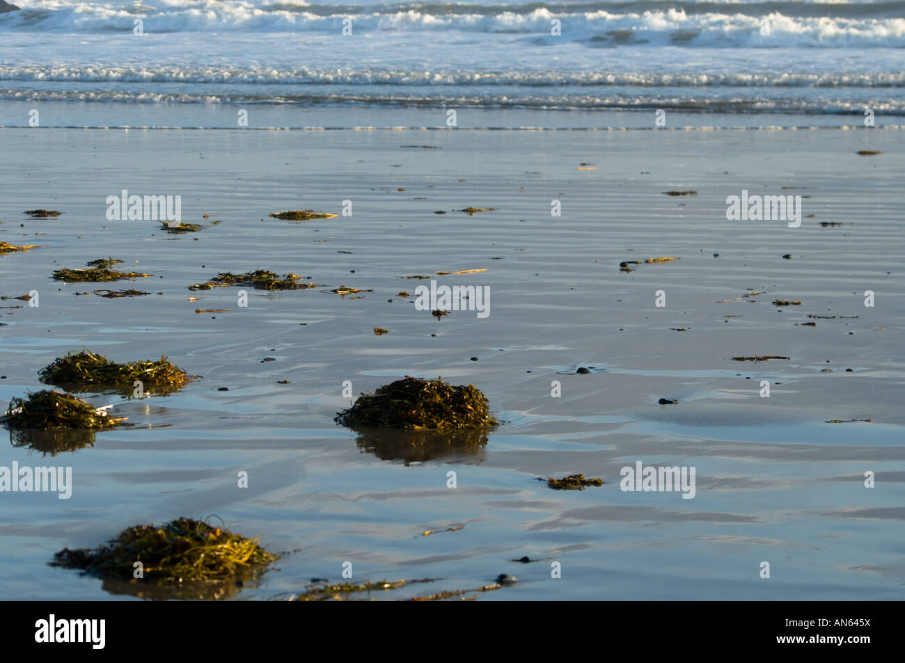 Seaweed on the smooth shiny shore at low tide Martinique beach Nova