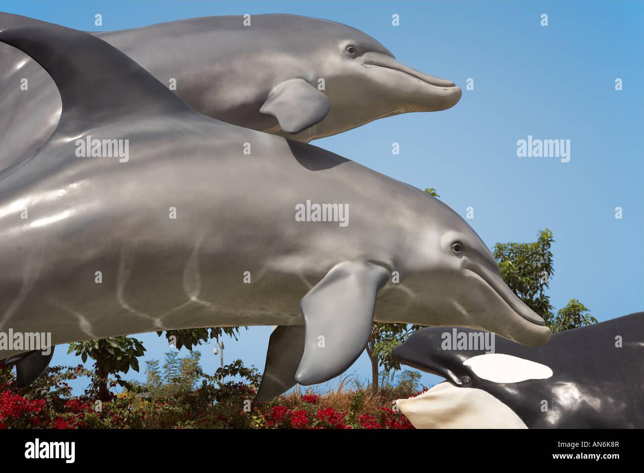 Delfine im Dubailand dolphins in Dubailand UAE - Stock Image