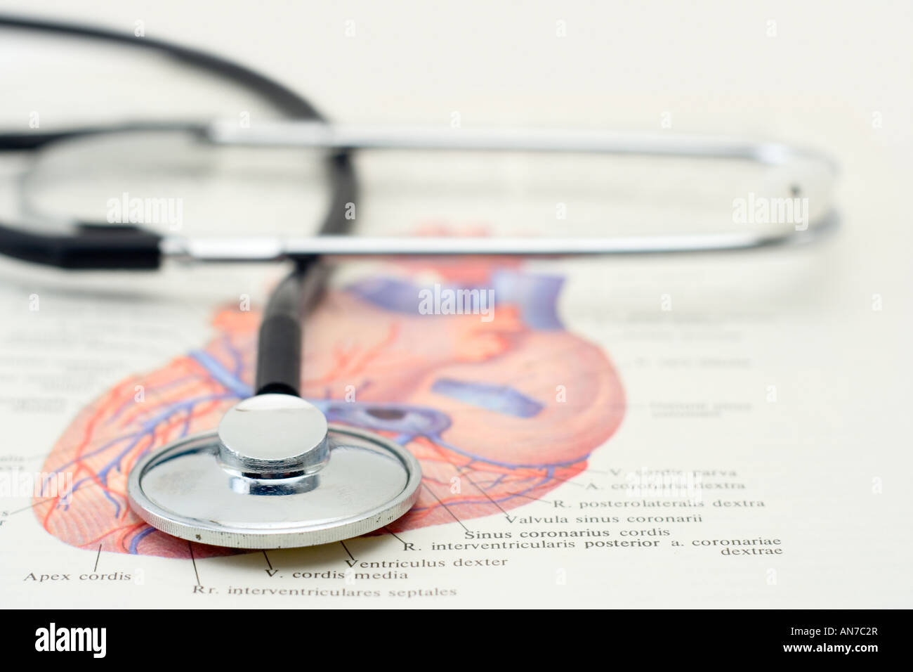 Medical College Anatomy Stock Photos & Medical College Anatomy Stock ...