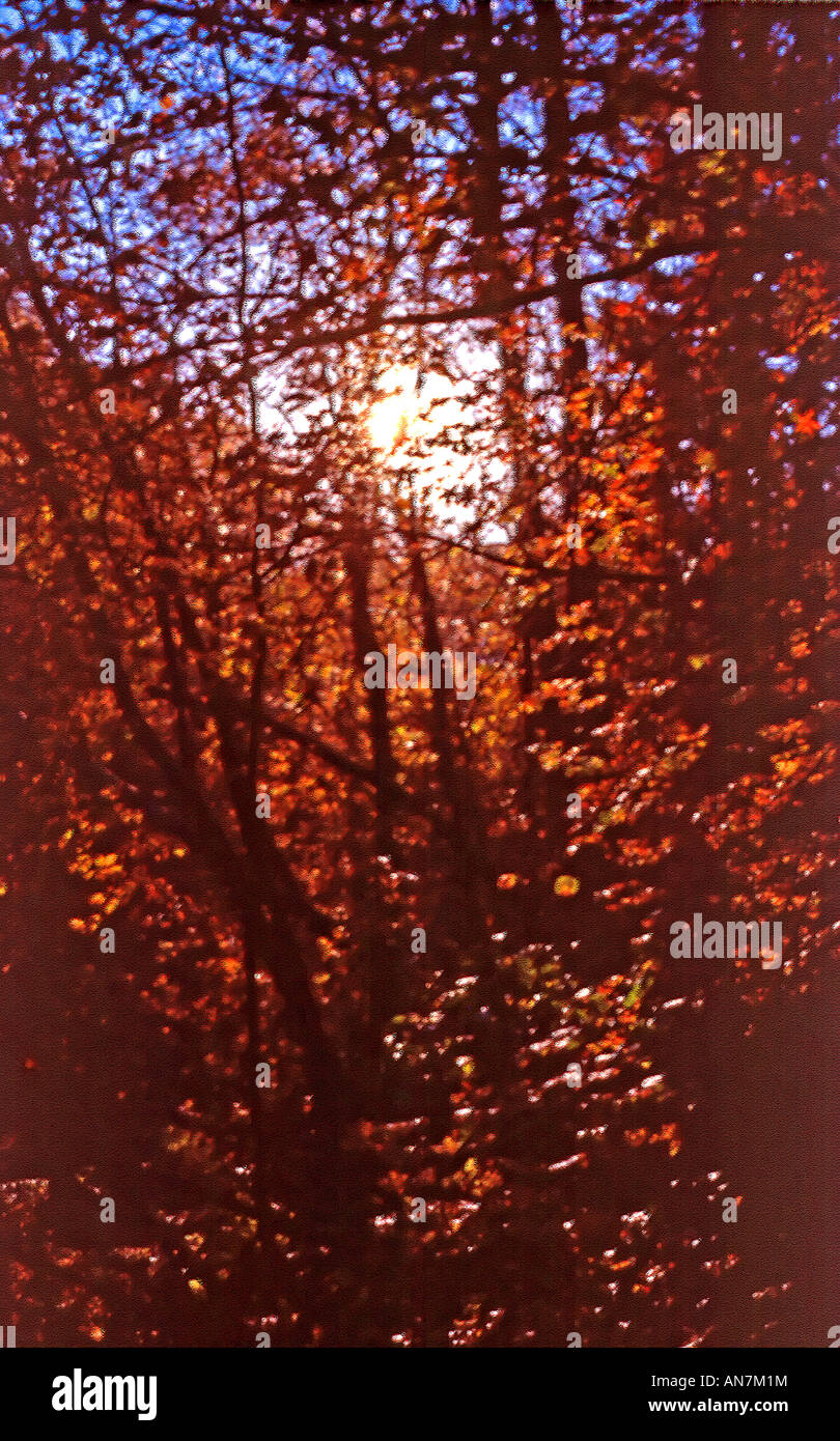 An abstract, painterly seasonal fall image taken in the Wasatch Rocky Mountains of north America as the sun was - Stock Image