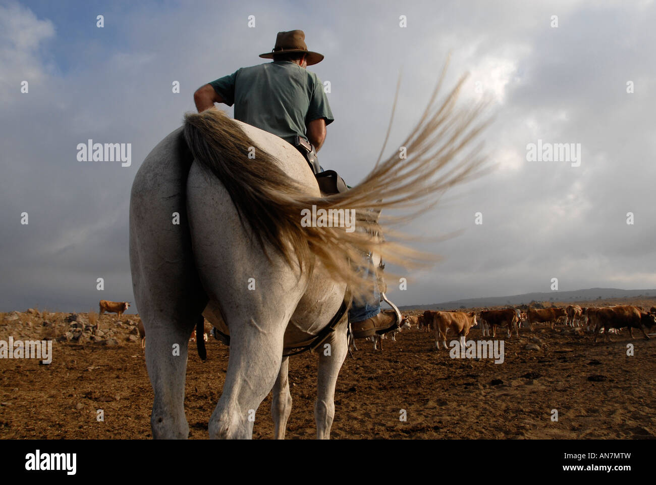 An Israeli cattle herder wearing a pistol mounted on a horse in the Golan heights northern Israel Stock Photo