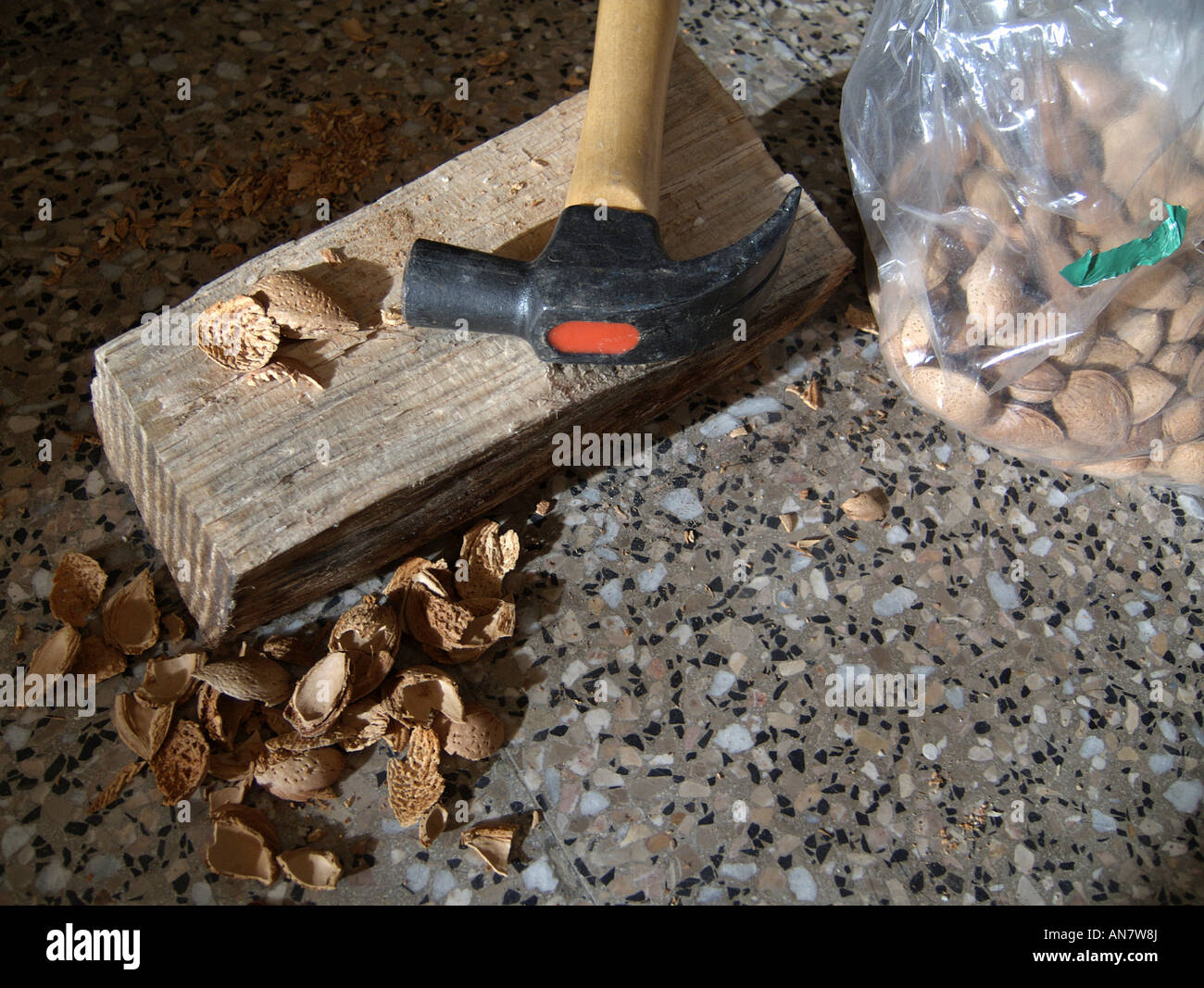 Opening almonds with a claw hammer on wooden base. - Stock Image