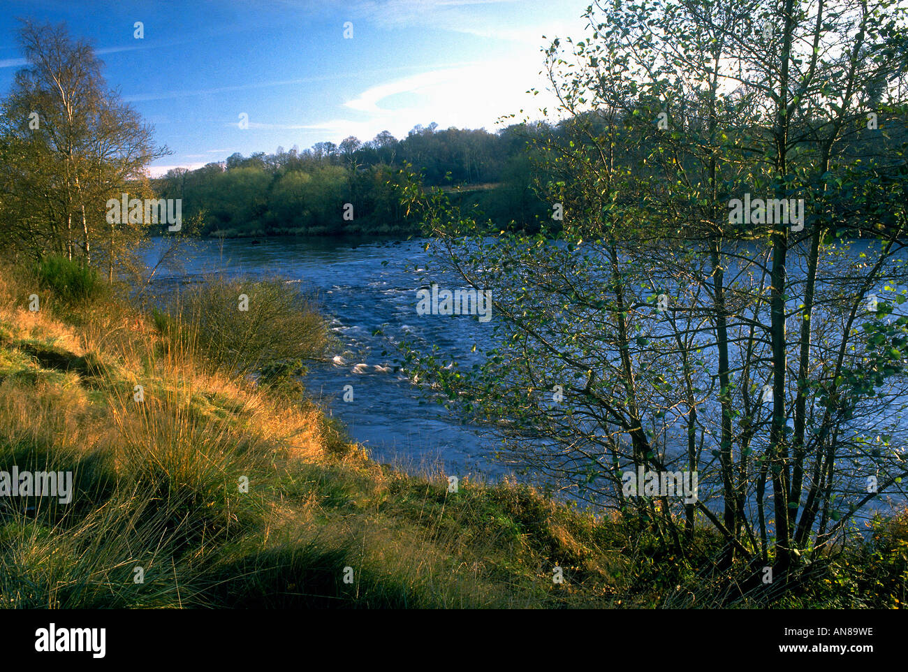 The River Tyne at Wylam - Stock Image