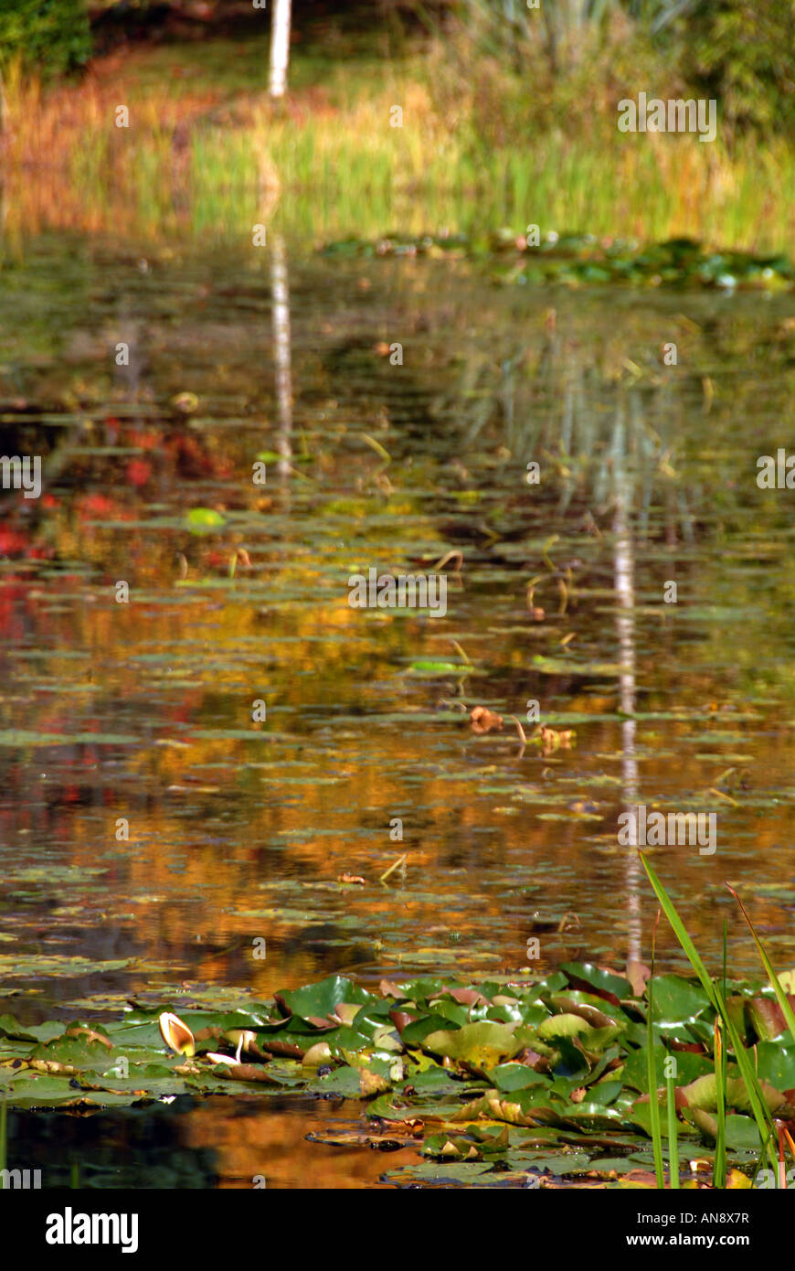 A lake reflection of autumn colours at one of Southern Ireland s famous tourist attractions Powercourt in the Wicklow - Stock Image