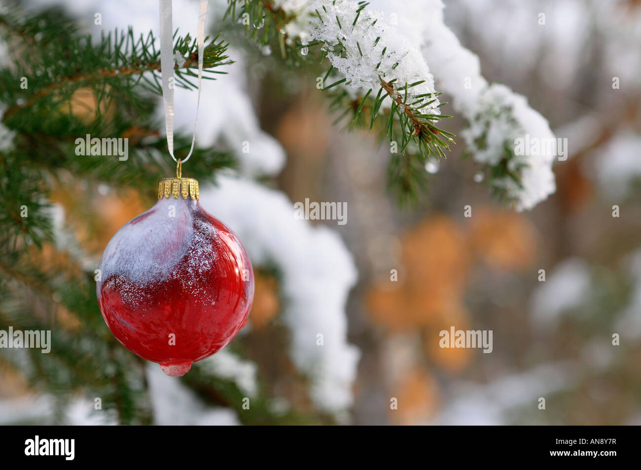 Red Glass Ball Ornament Hanging On Snow Covered Christmas