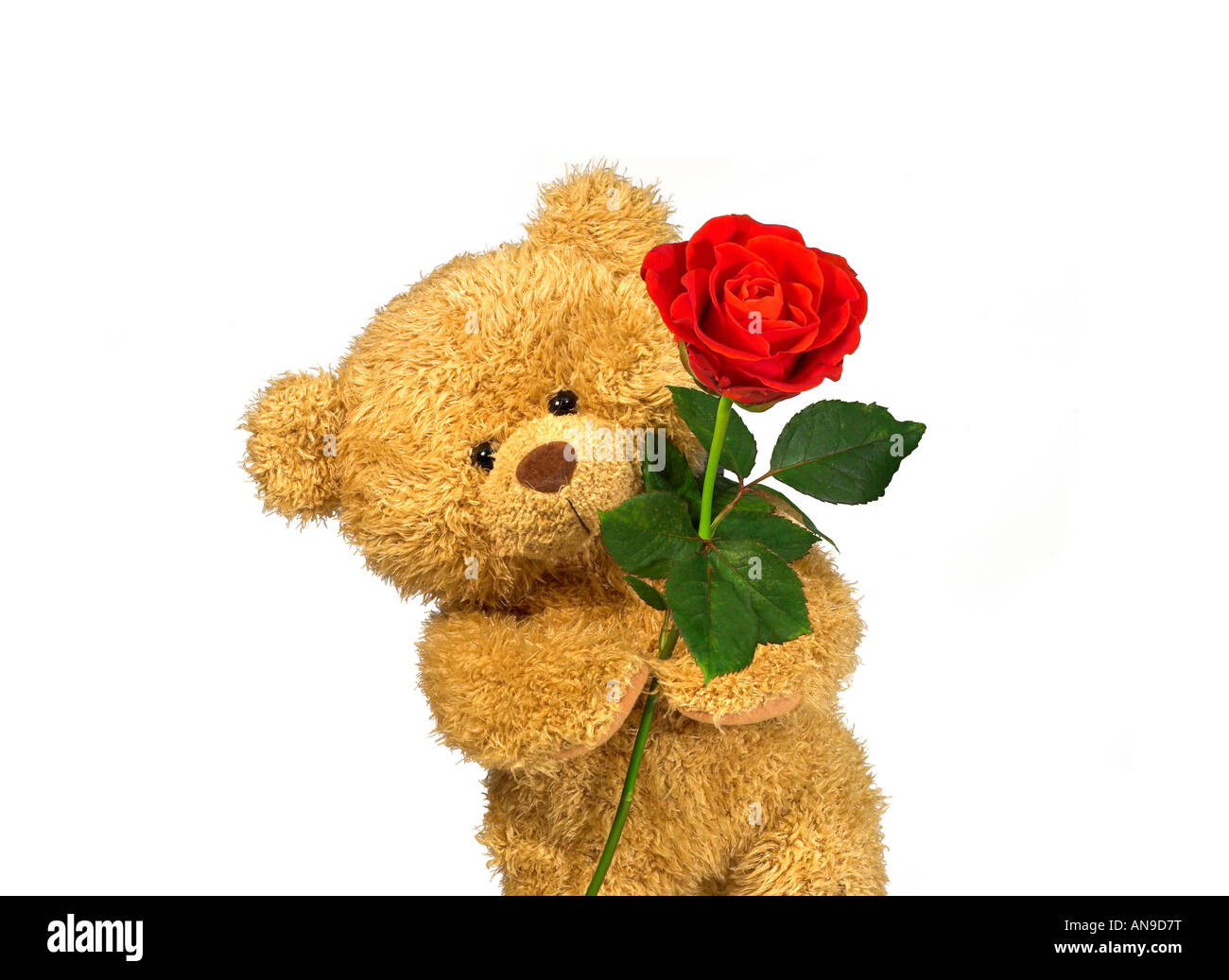 Teddy bear with red rose stock photo 15455531 alamy teddy bear with red rose izmirmasajfo