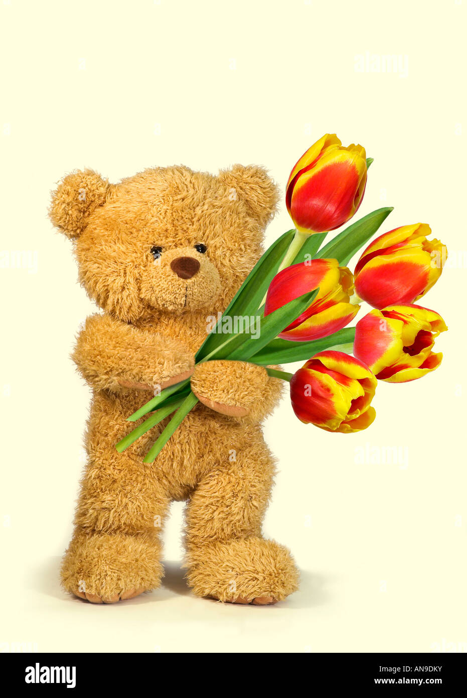 teddy bear with tulips - Stock Image