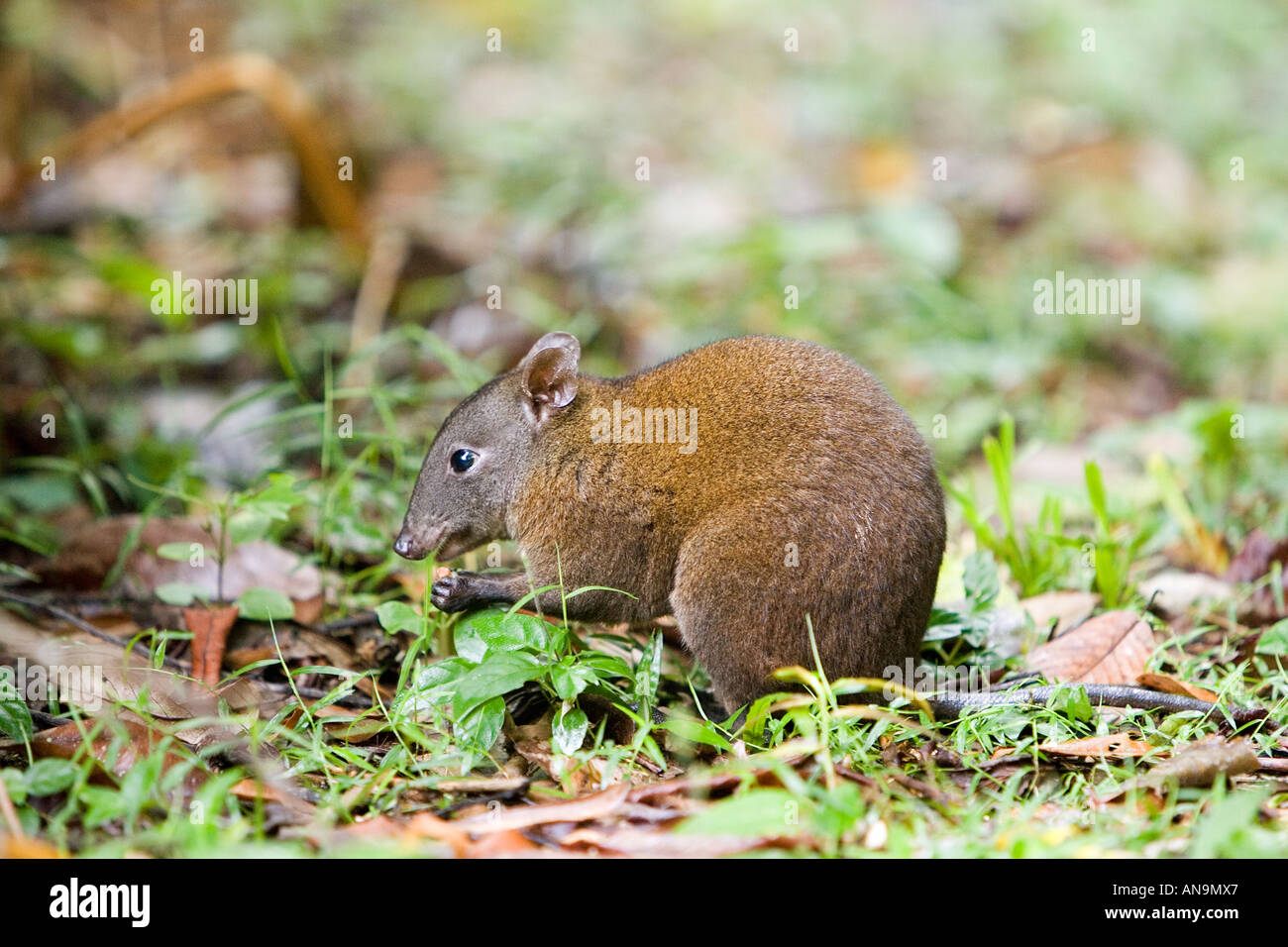 Forest Dwelling Species Stock Photos Amp Forest Dwelling