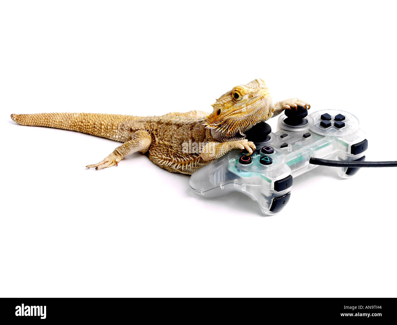 Bearded dragon with a playstation. - Stock Image