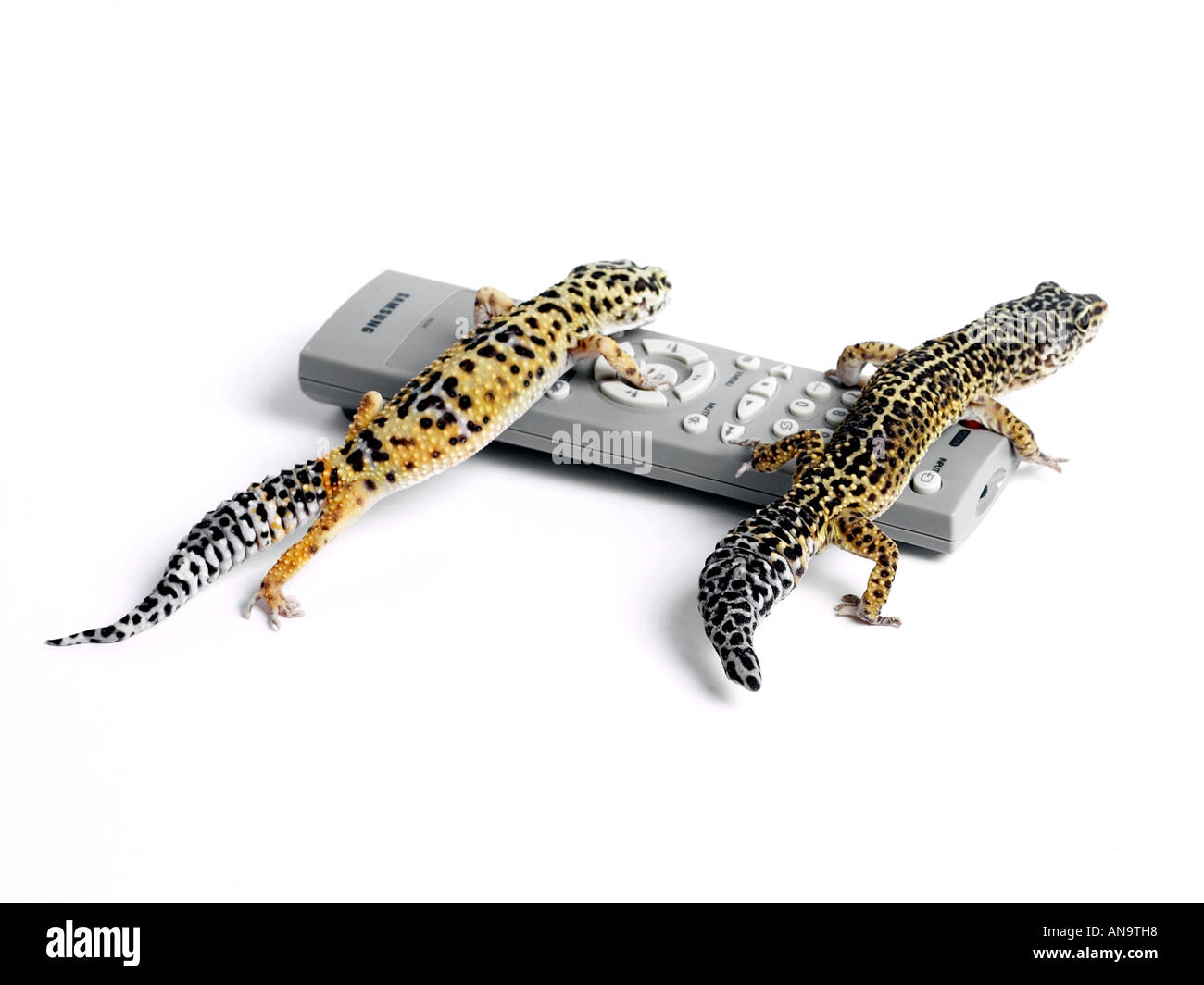 Geckos on a remote control. - Stock Image