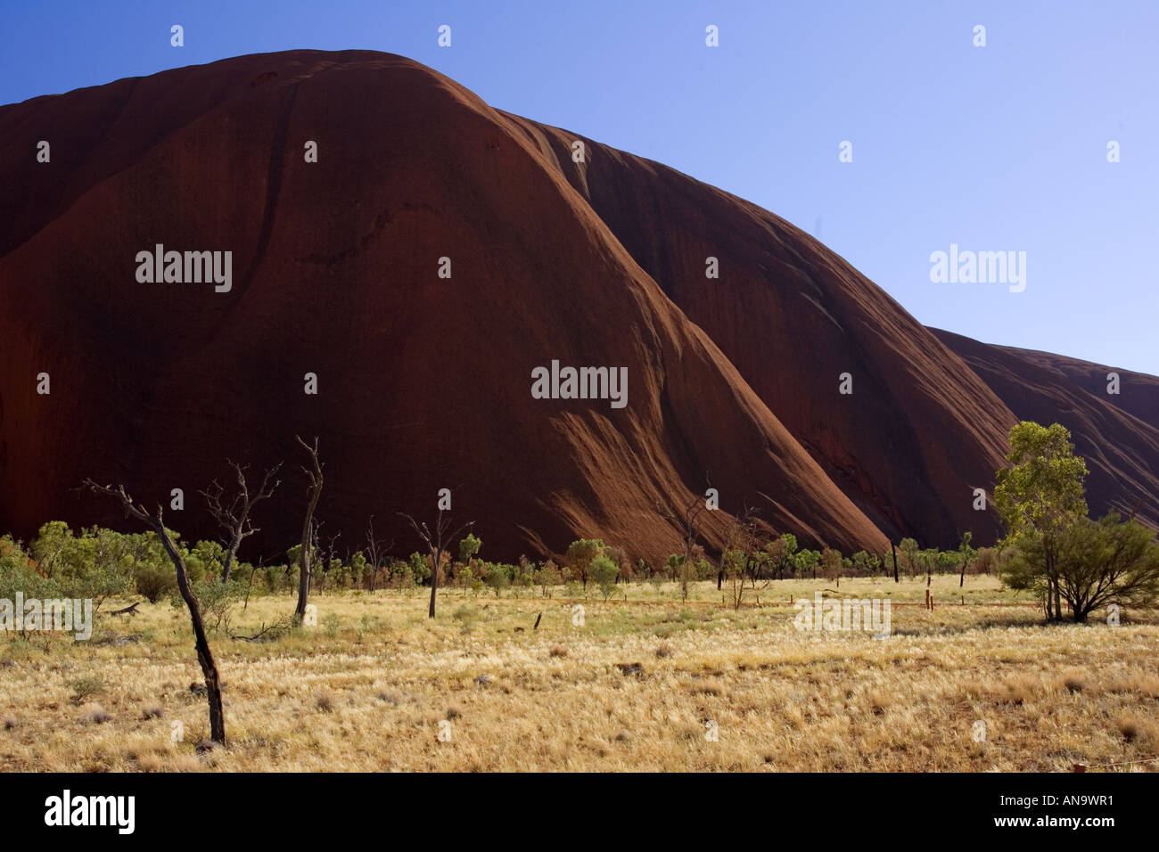 Trees at the base of Ayers Rock Uluru Red Centre Australia Stock Photo