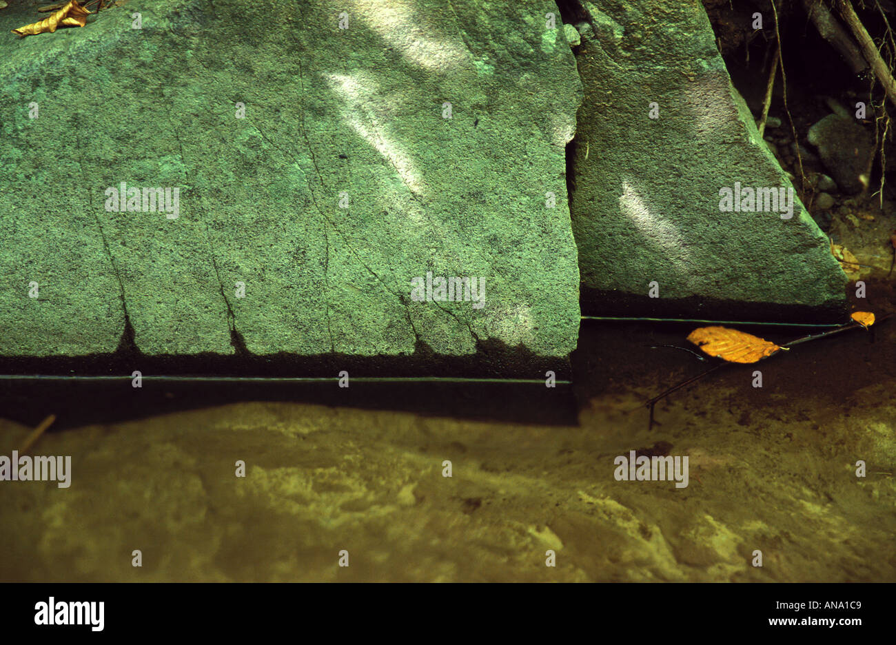 Yellow leaves leaf and green boulder Stock Photo