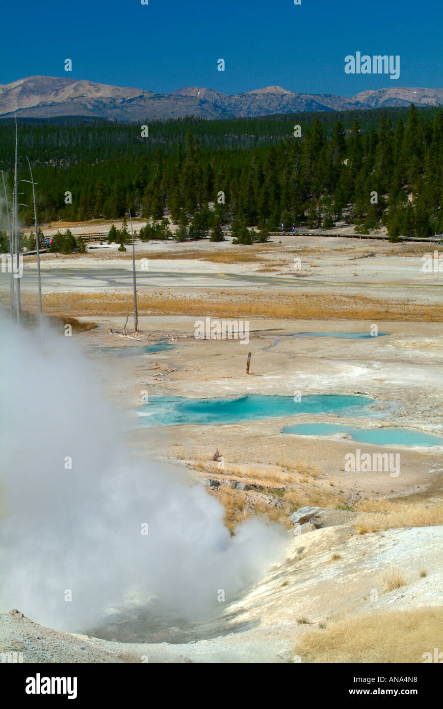 Black Growler Steam Vent and View of Porcelain Basin in Norris Geyser Basin at Yellowstone National Park Wyoming Stock Photo
