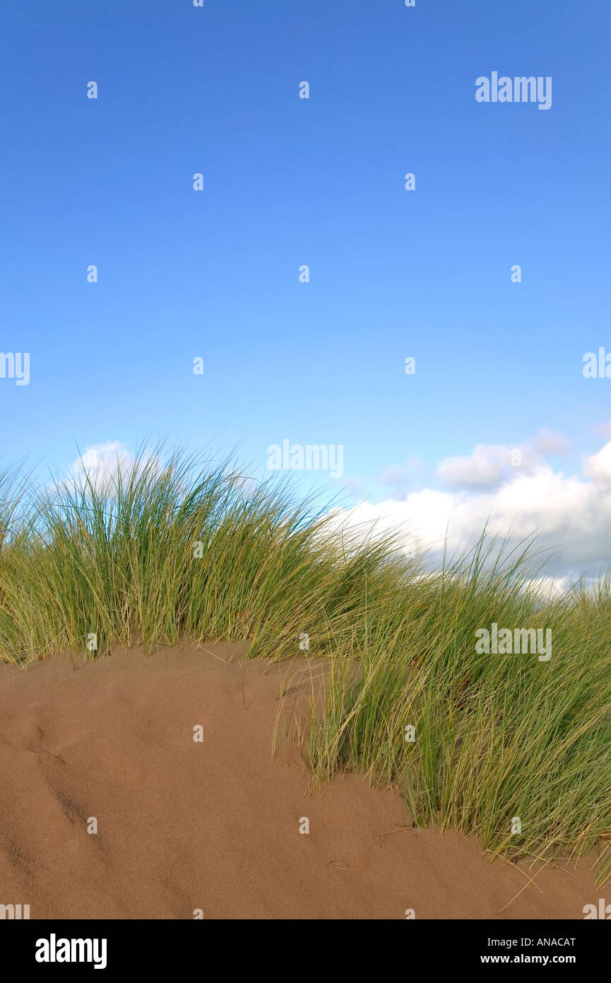 Sand dune with seagrass growing on it against a blue sky - Stock Image