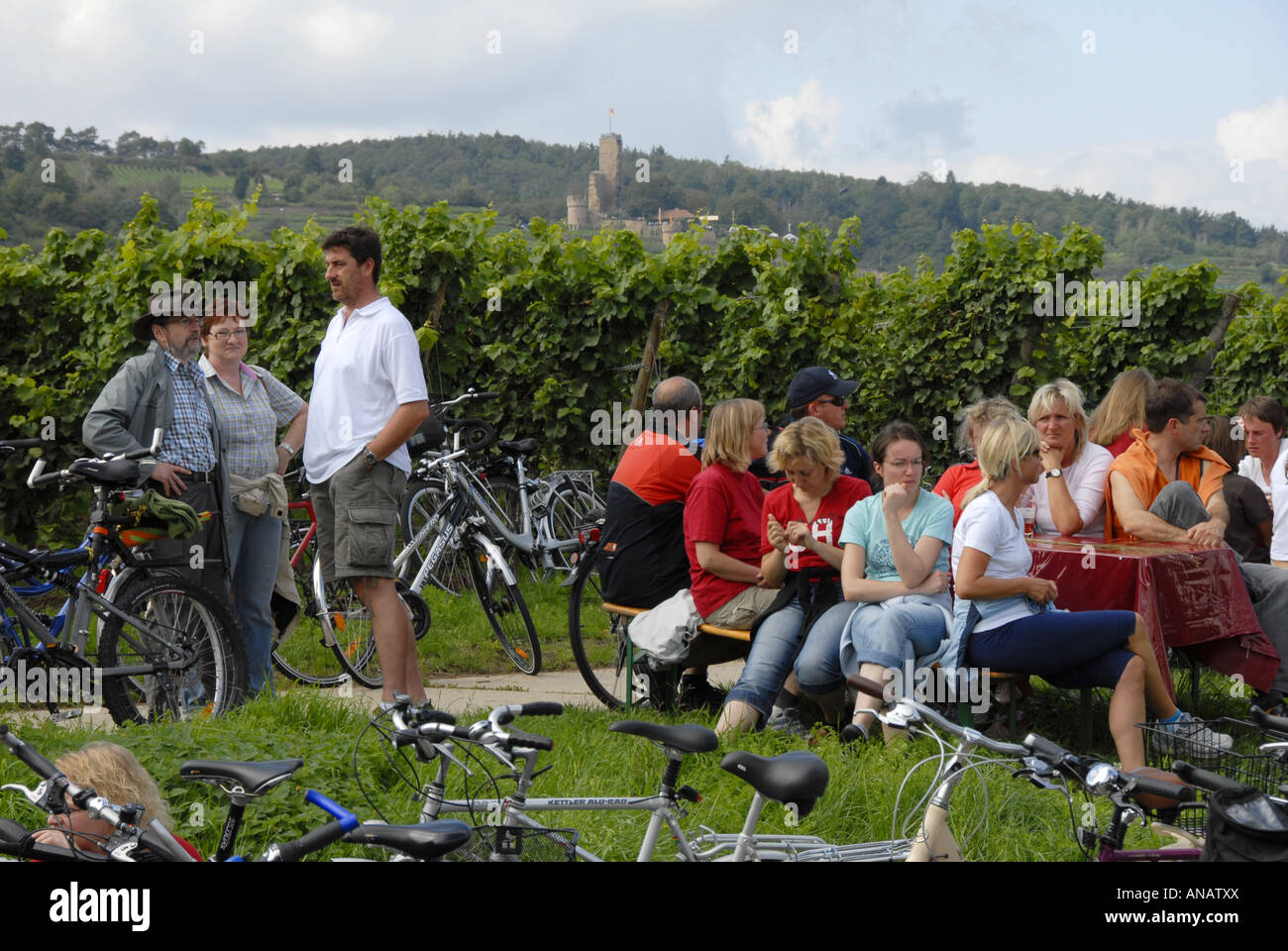 near Forst and Wachenheim; German wine route day, streets closed for cars, Germany, Rhineland-Palatinate, Deutsche - Stock Image