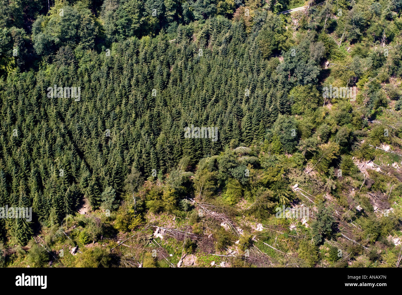 aerial view of storm losses in the forest, Germany, Baden-Wuerttemberg, Odenwald, Eberbach - Stock Image