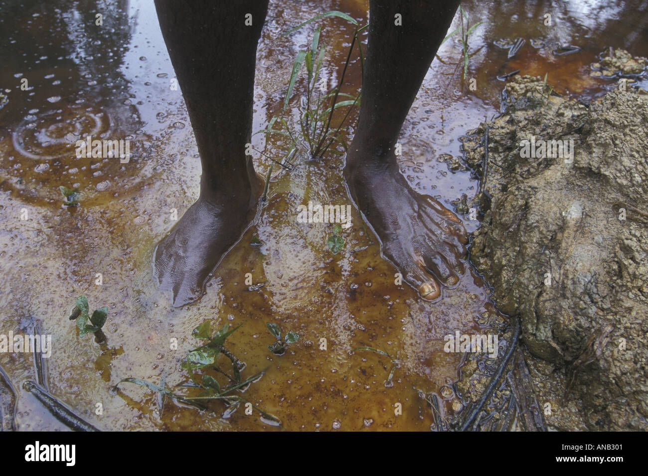 Oil spill in Niger delta forest, Nigeria - Stock Image