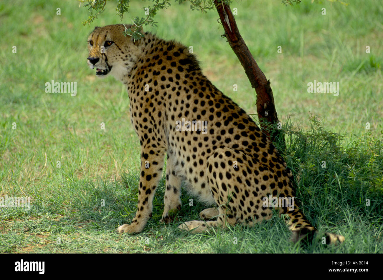 Kruger National Park South Africa  GMM 1016 Stock Photo
