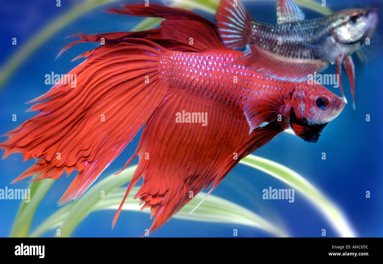 Female and male fish-7377