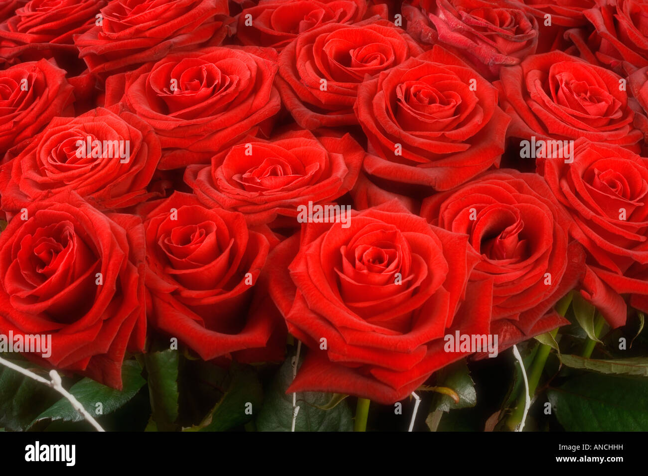 BOUQUET OF ROSES - Stock Image