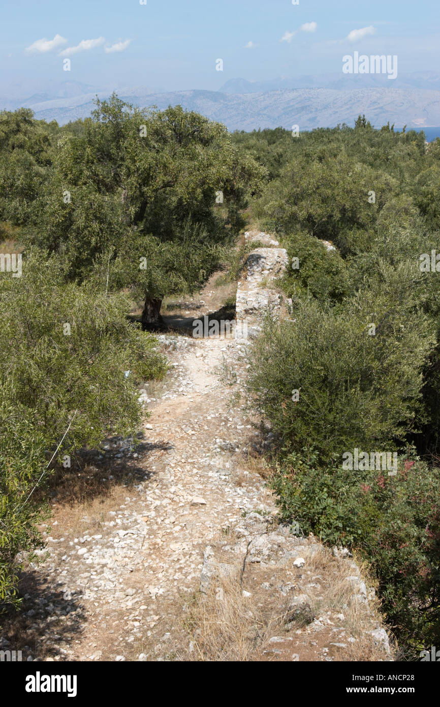 Olive trees grows on the ruins of Byzantine fortress in Kassiopi. Corfu island, Greece. - Stock Image