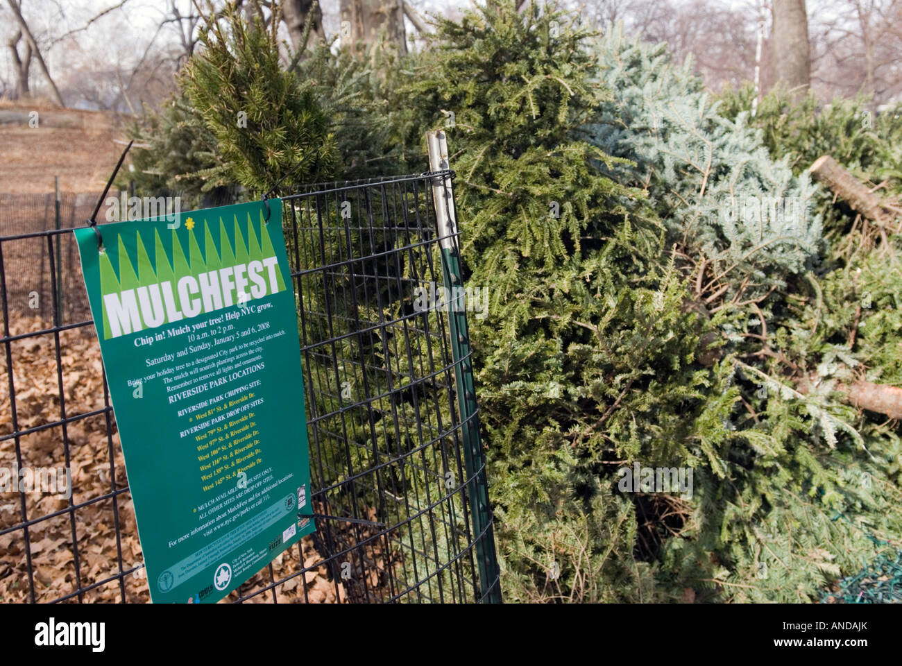 Christmas Tree Recycle Stock Photos & Christmas Tree Recycle Stock ...