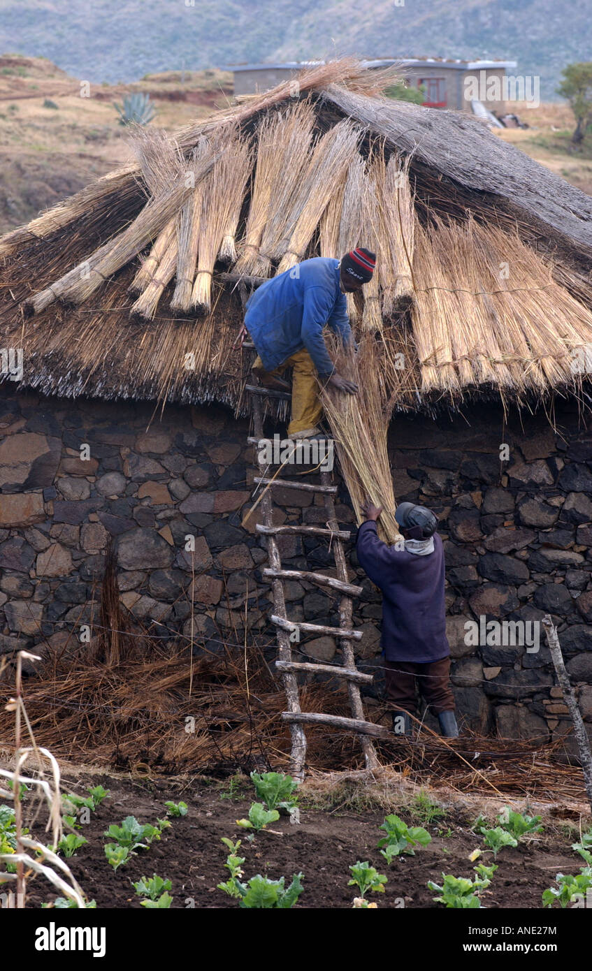 Thatching a roof in lesotho, Southern Africa - Stock Image