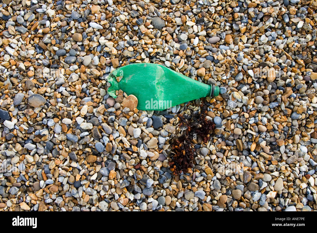 Plastic bottle discarded next to seaweed on Cley Beach Norfolk United Kingdom - Stock Image