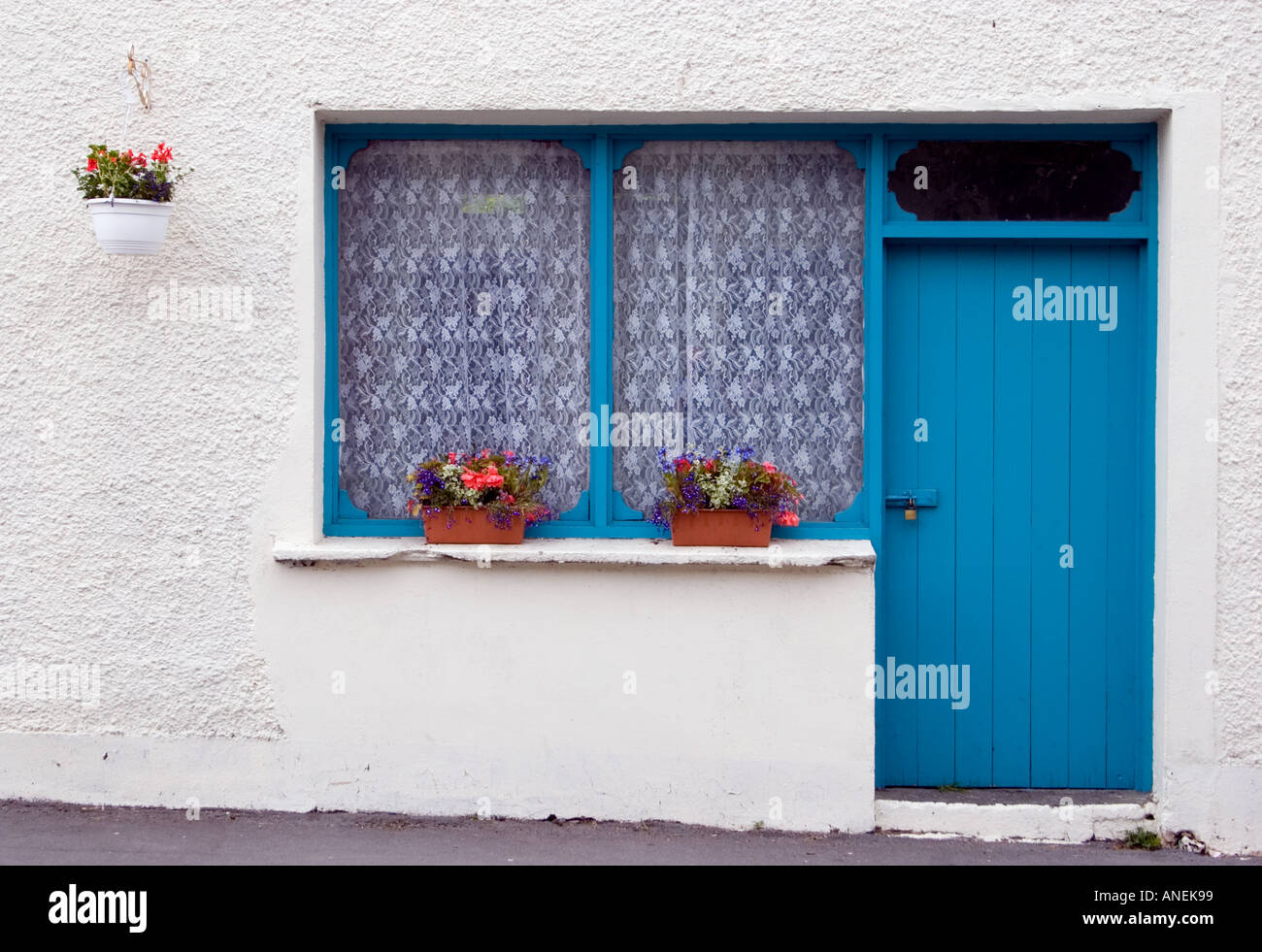 Blue door and window frame, white wall of Irish cottage with flower ...