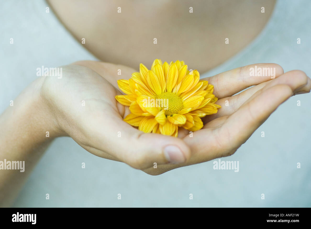 Woman holding flower in cupped hand, close-up - Stock Image
