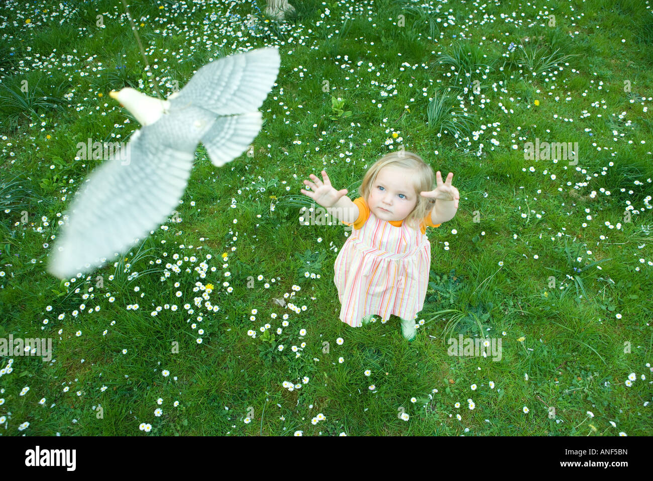 Toddler Girl Reaching For Toy Bird High Angle View Stock
